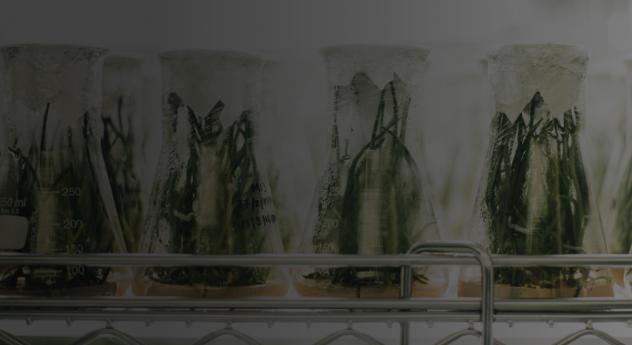 Webinar – Mintel Big Conversations: Nature Vs Science