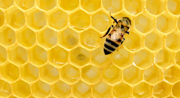 Webinar – What we can learn from bees at a time of change?